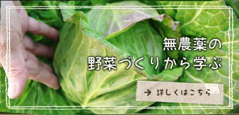 無農薬の野菜づくりから学ぶ
